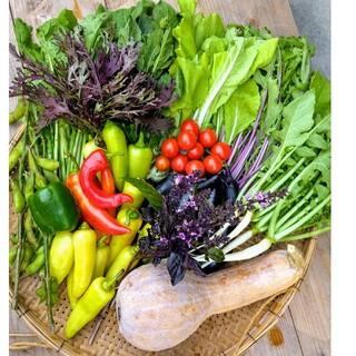 無農薬 野菜セット 80サイズ 10~8種類 有機 オーガニック