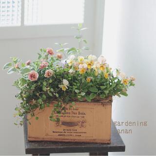 お花の贈り物❁⃘カリブラコア&ビオラの可愛い寄せ植え