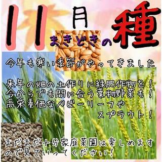 11月まきどき 固定種 在来種 有機種子 野菜の種 ハーブの種 緑肥 種子 種(野菜)