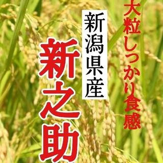 新潟県産新之助極み 玄米10㎏(令和3年産)