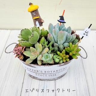 【H5】#多肉植物#寄せ植え#そのまま飾れる#ガーデンピック付#ハロウィン
