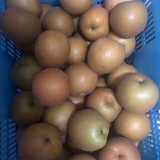 福島県産 新高梨3kg ご家庭用 サービス