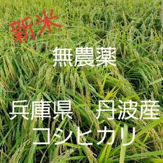 令和3年 兵庫県丹波産 無農薬コシヒカリ10キロ