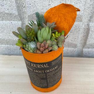 リメ缶に多肉植物 寄せ植え(プランター)