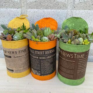 リメ缶に多肉植物 寄せ植え 3個セット(プランター)