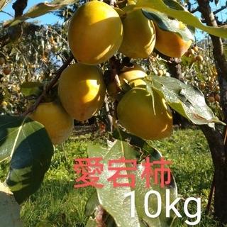 愛媛県産❕渋柿『あたご柿』10kg
