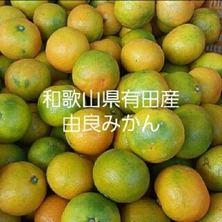 和歌山県有田産 小粒由良みかん5kg