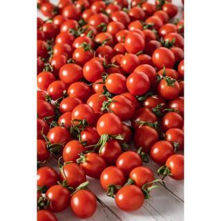プチッと弾ける果汁🍅特別栽培「宮トマト」1㎏