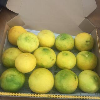 柚子 柚子無農薬1.1~1.2kg