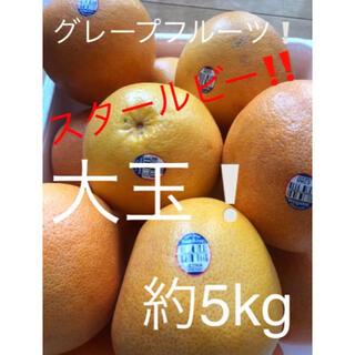 グレープフルーツ 大玉 スタールビー 約5kg(フルーツ)