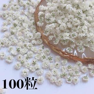 かすみ草 ドライフラワー ホワイト(各種パーツ)