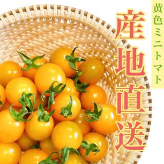イエローミミ 1kg 採れたて直送☘️ トマト嫌い お子様にも!(野菜)