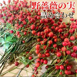 【ネコポス満杯】野薔薇の実 スワッグ 素材 インテリア 野ばらの実 (ドライフラワー)