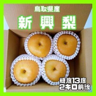 ❤️鳥取県産❤️新興梨 4玉 2kg前後 60サイズ 糖度13度 二十世紀梨