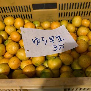 有田みかん20キロ価格