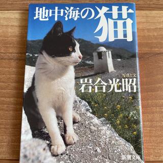 書籍 地中海の猫 写真集 にゃん エーゲ海 アドリア海 ヨーロッパ 海外旅行