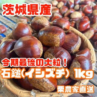 【大粒】茨城県産!定番品種[石鎚]1kg