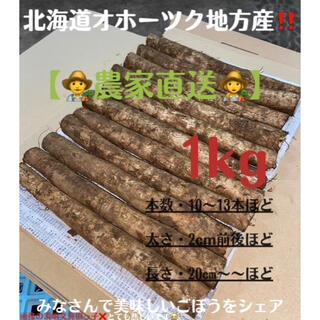 北海道オホーツク地方産 掘りたて新鮮土付きごぼう 農家直送 1kg