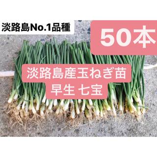 50本!淡路島産玉ねぎ苗七宝早生!送料無料
