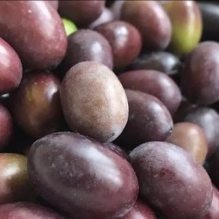 手摘み 完熟 グリーン オリーブの実 500g 完全無農薬 レシピつき④(野菜)