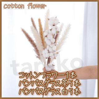 ホワイト & ブラウン パンパスグラス 10本 コットンフラワー ドライフラワー(ドライフラワー)