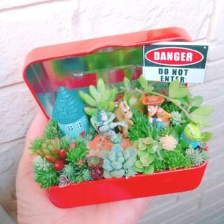 多肉植物寄せ植え 即購入OK!