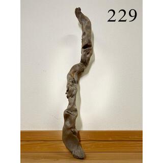 流木【229】