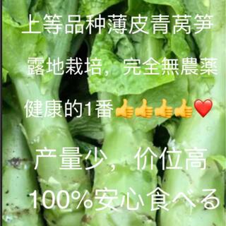 上等品种皮超薄青蒿笋10本以上,80サイズ