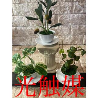 光触媒 人工観葉植物 ウォールグリーン 造花 アレンジ3種cc