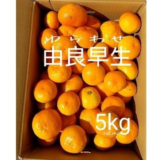 【送料無料】みかん 由良早生  ゆらわせ  由良 ミカン/箱込み5キロ