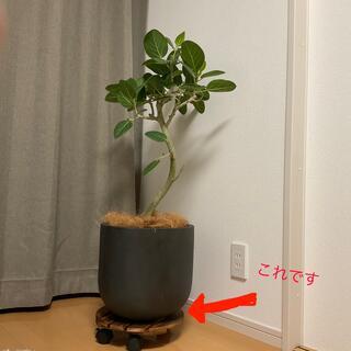 【新品未使用】植木鉢用台 30cm×8cm(プランター)