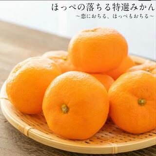 みかん 小玉 3キロ 約42個入 長崎県産 果物 蜜柑 ミカン フルーツ 伊木力