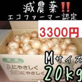 北海道産玉ねぎ Mサイズ 20kg