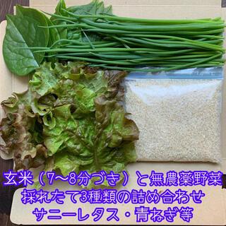 玄米(7〜8分づき)と無農薬野菜*採れたて3種類の詰め合わせ*サニーレタス等*(野菜)