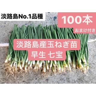 5.淡路島産玉ねぎ苗七宝早生100本おまけ付き送料無料(野菜)
