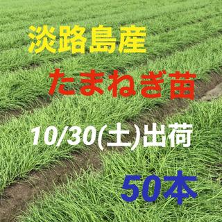淡路島産 玉ねぎ苗 100本(野菜)