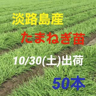 淡路島産 玉ねぎ苗 50本(野菜)