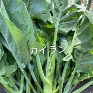 無農薬カイラン300g(野菜)