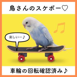 バードトイ インコ スケボー 大人気 SNS映え 鳥さんスケボー セキセイインコ(鳥)