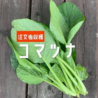 兵庫県産 小松菜(野菜)