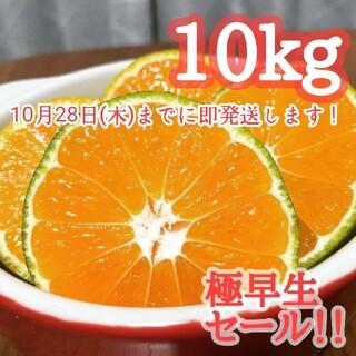2【即発送】10kg 極早生みかん 大好評!コスパ◎ 佐賀県産 ミカン