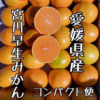 愛媛県産 宮川早生みかん コンパクト便 柑橘 ミカン