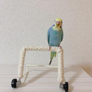 バードパーチスタンド インコの止まり木(鳥)