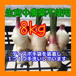 新生姜 8kg  減農薬栽培 鹿児島産