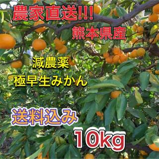 農家直送 減農薬 家庭用極早生みかん10kgサイズ混合