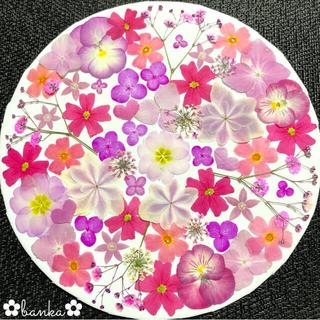 ✿押し花素材✿ピンク系アソート【40枚】