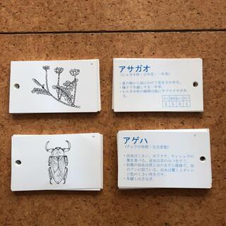 日能研 理科カード
