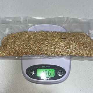 オーツ麦 皮付き 約100g(鳥)