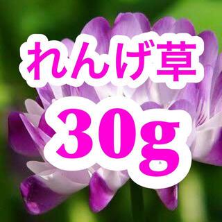 【最安、説明書付き】レンゲ草(れんげ草、蓮華草)種たっぷり30g[3000粒](その他)