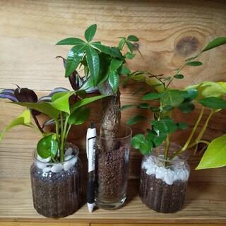 ハイドロカルチャー 観葉植物 3点セット(プランター)